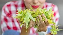 Léčivý lipový květ je poklad z přírody