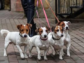 Psi jsou naši věrní přátelé, se kterými trávíme tolik času, kolik můžeme