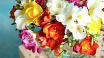 Frezie nám nabídnou kromě krásných  barev i nádhernou vůni.