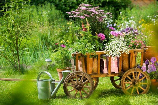 Květiny mohou růst všude
