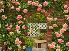 Pokud byste si chtěli popínavé růže vysadit na vlastní zahradu, předně si budete muset vybrat vhodný druh