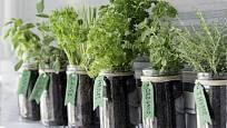 Na pěstování bylinek se hodí i zavařovací sklenice