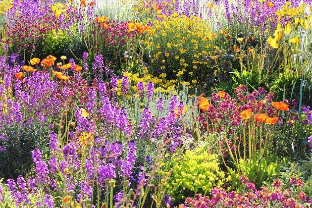 Pestré květiny potěší každého
