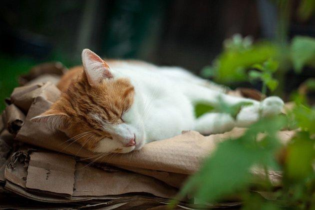 Šanta působí blahodárně na kočky.