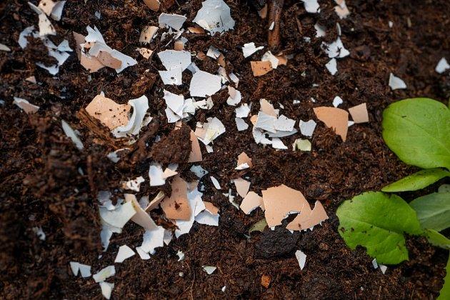 skořápky zahrada