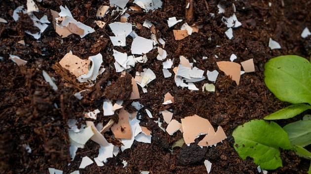 Máte zahradu a na ní slimáky? Od teď schraňujte vaječné skořápky