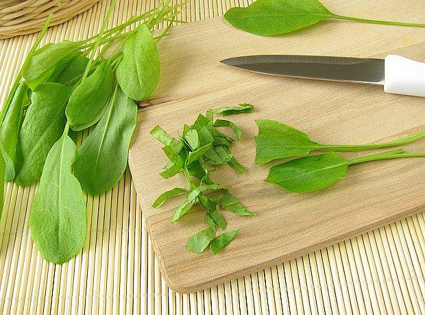 Šťovík zahradní se hodí do salátů i teplé kuchyně