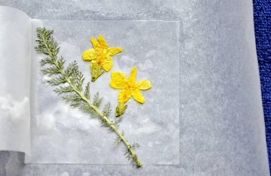 Vylisované květiny pokládáme na horký vosk