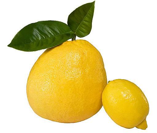 Citrus cedrát v porovnání s citronem