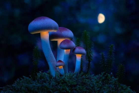 Vliv měsíce na houby prokázaný není. Avšak skrývají před námi ještě mnohá jiná tajemství