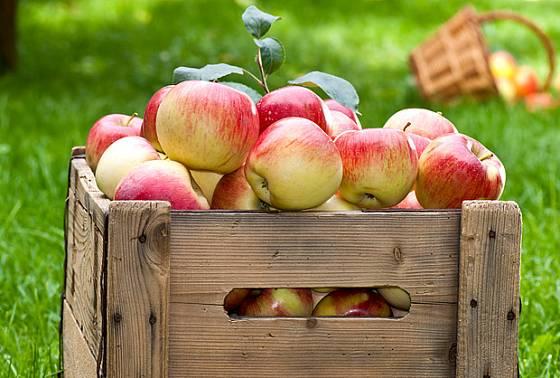 Není nad vlastní jablka