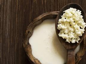 V zrníčkách, známých jako tibetská houba, se ukrývá několik druhů ušlechtilých kvasinek a probiotických bakterií.