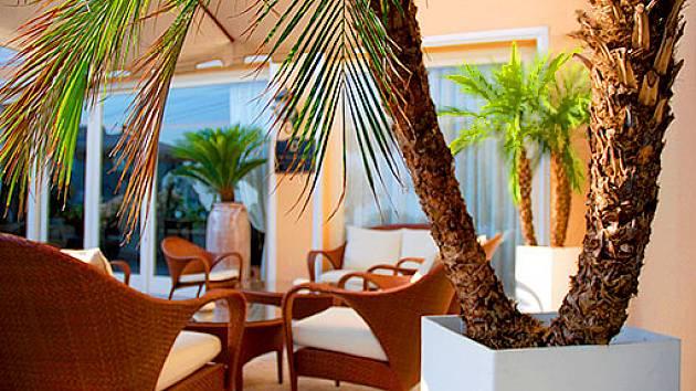 palmy atraktivn pokojov a p enosn rostliny pokojov rostliny. Black Bedroom Furniture Sets. Home Design Ideas