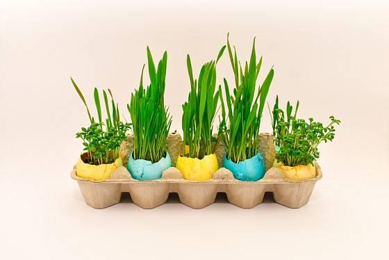 Skořápky můžete před vysazením bylinek ještě obarvit