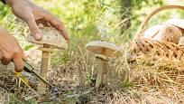 Bedla vysoká je vynikající houba