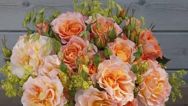 růže odrůdy Landlust