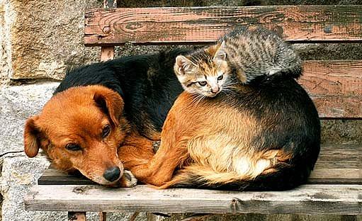 pes a kočka z útulku