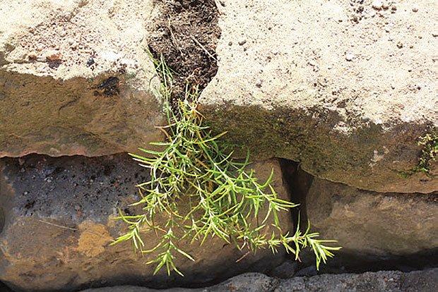 Sázení rostlin do spár při stavbě