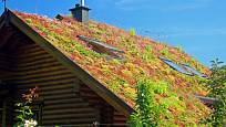 Střecha porostlá rostlinami sedum.