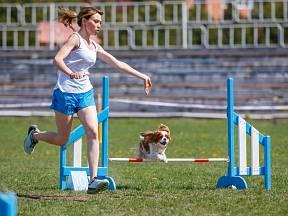 Psi soutěží ve třech oddělených kategoriích - malí, střední a velcí.