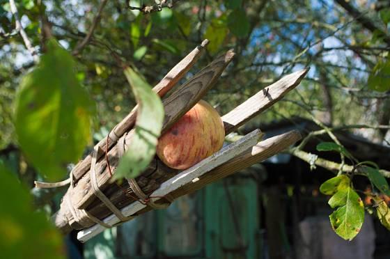 Dřevěný česáček ovoce vlastnoruční výroby.