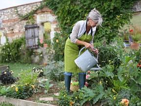 Jednoduchá pravidla, jak správně zalévat zeleninu
