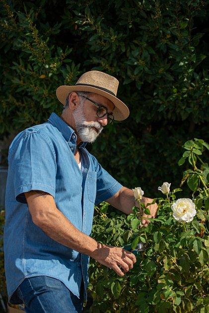 Růže stříhejte zahradnickými nůžkami, ty jsou nejvhodnější.