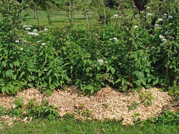 Piliny postupným rozkladem pomalu uvolňují do půdy v okolí rostlin dusík.