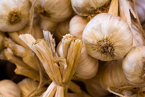Usušený česnek lze dlouhodobě skladovat