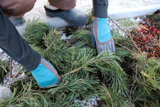 Chvojí borové i smrkové je ideální zimní ochranou na skalky i štěrkové záhony se suchomilnými rostlinami
