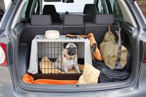 Přepravní boxy a klece jsou pro malá psí plemena nejbezpečnější.