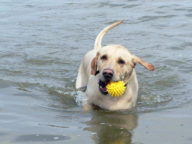 Plovoucí míček.