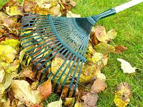 hrabání listí na podzim
