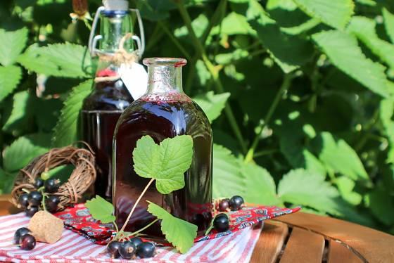Z josty, podobně jako z ostatních bobulovin můžeme připravit chutný likér.