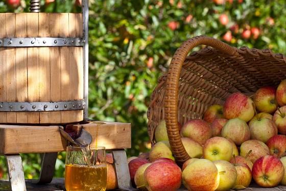 Jablečný mošt je nejlepší čerstvě vylisovaný.