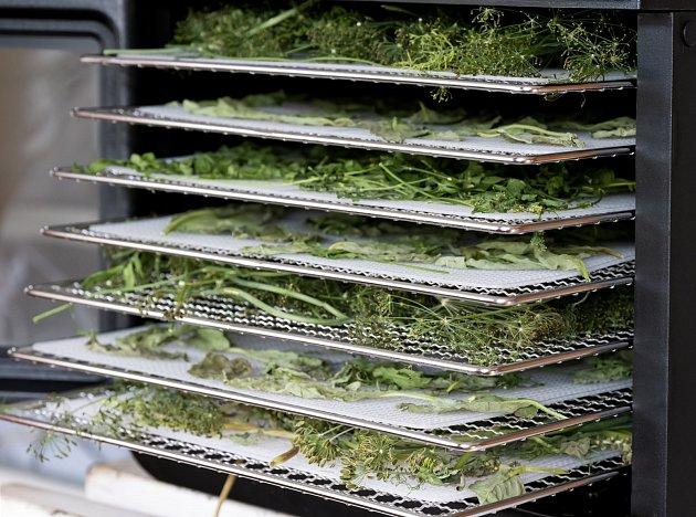 Bylinky sušte v troubě či sušičce, ale pozor na teplotu.