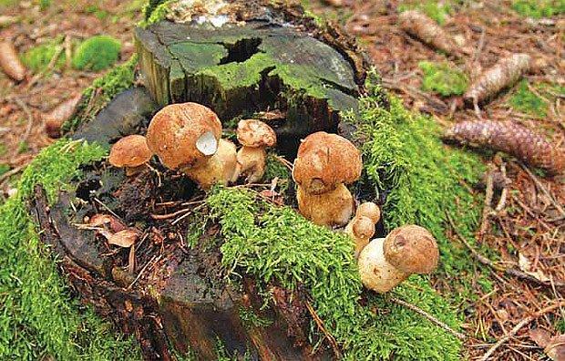 Na houby na zahradu