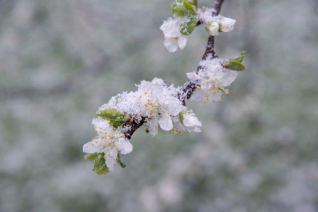 Trocha sněhu nevadí, mráz již ano