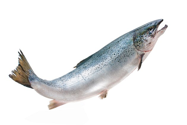 Lososí maso nemá typický rybí odér, ani miniaturní kosti.