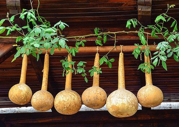 sušené plody kalabasy