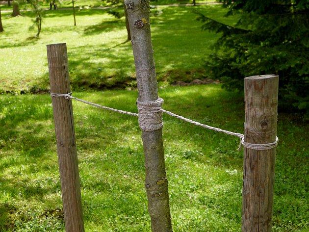 Stromek může podpírat jeden kůl, nebo hned dva