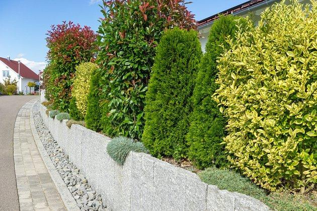 Živý plot z různých dřevin může být velmi pestrý.