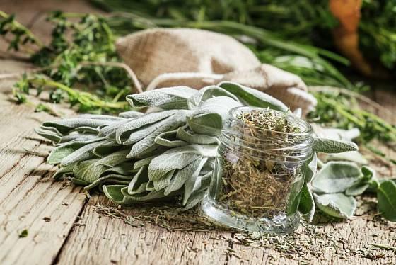 Důkladné usušení a správné skladování má na kvalitu léčivé rostliny zásadní vliv