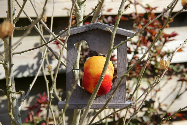 Krmítko na zavěšení jablka