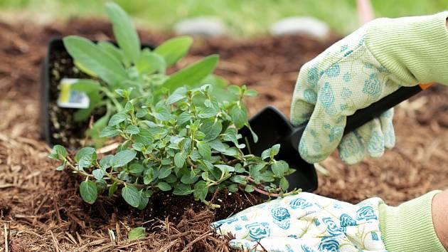 Každá rostlina by měla mít kolem sebe dostatek prostoru pro svůj růst
