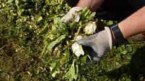 Zelená štěpka je ideální komponenta do kompostu