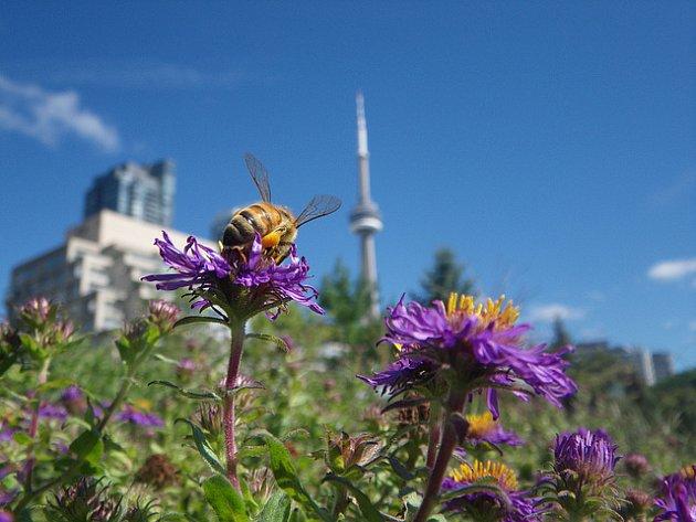 Městské včely