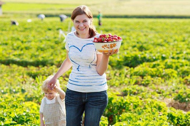 Na jahody může vyrazit celá rodina