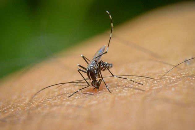 Komáři dokážou být pěkně otravní.