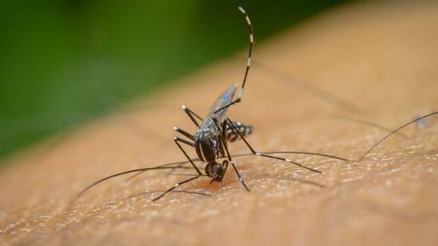 Jak se zbavit otravných komárů